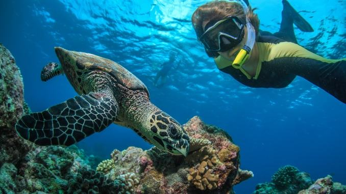 Snorkelling on a Maldives tour