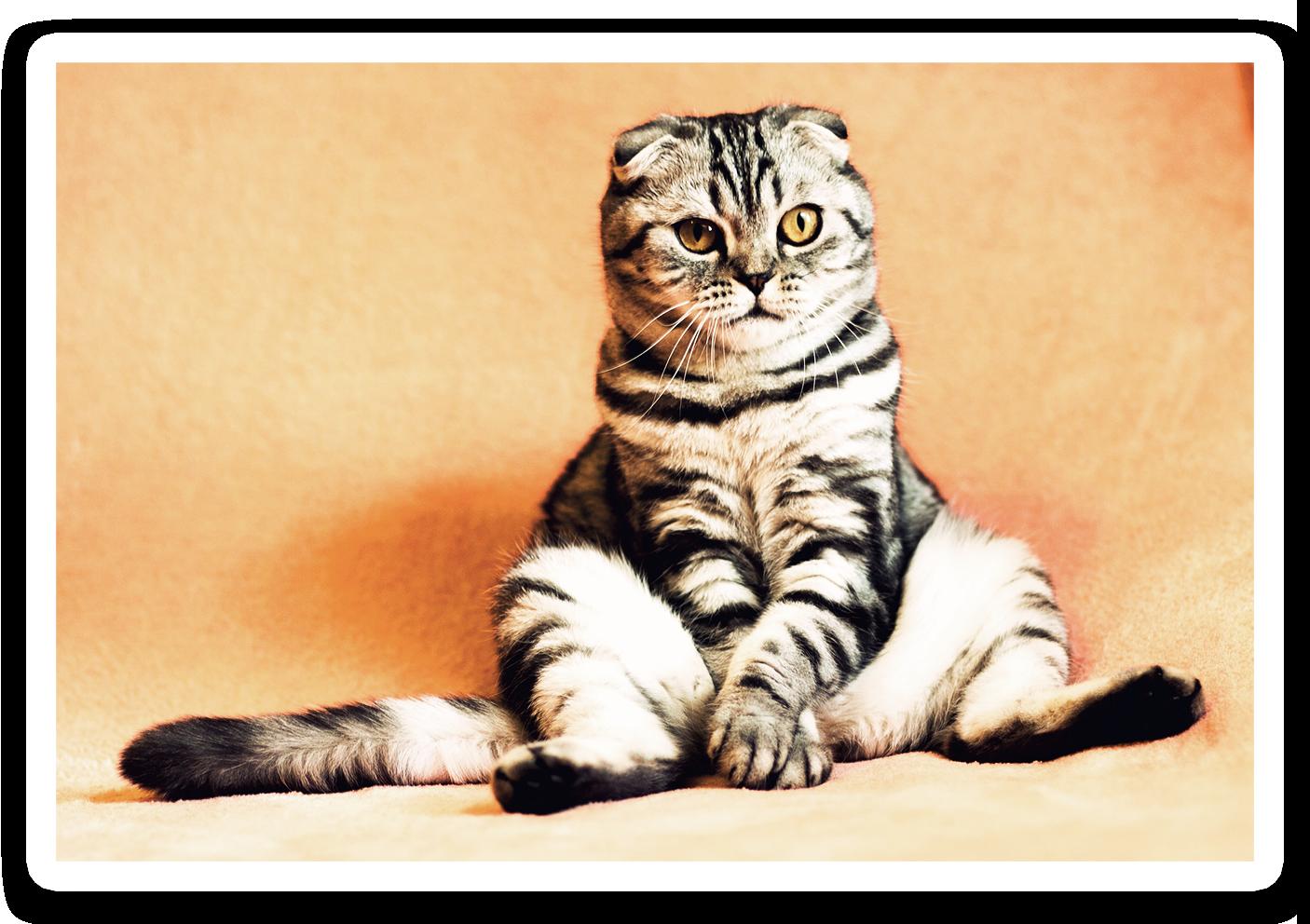 chat noir et gris assis