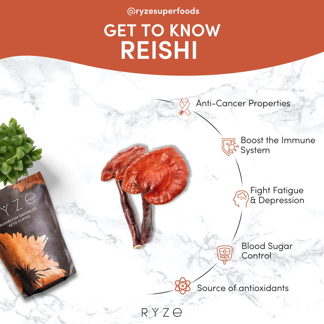 Reishi benefits infographic