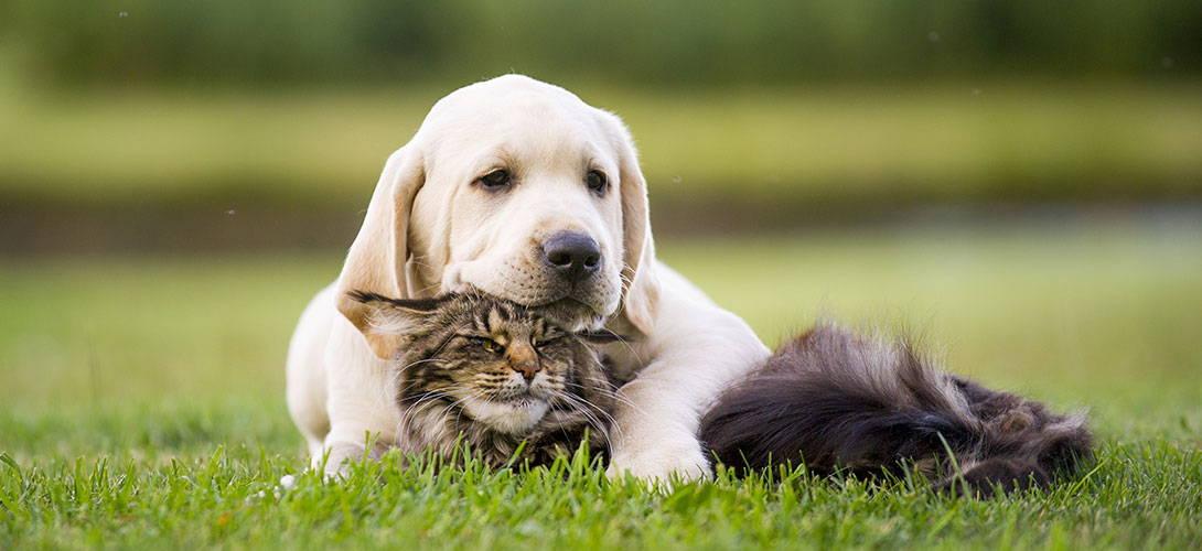 Hund wichtiger als partner
