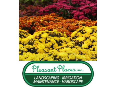 Assortment of Fall Annuals
