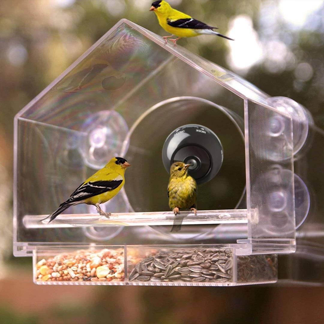 bird buddy camera feeder live hummingbird feeder cam cornell live feeder cam wifi bird feeder camera sapsucker woods live bird cam