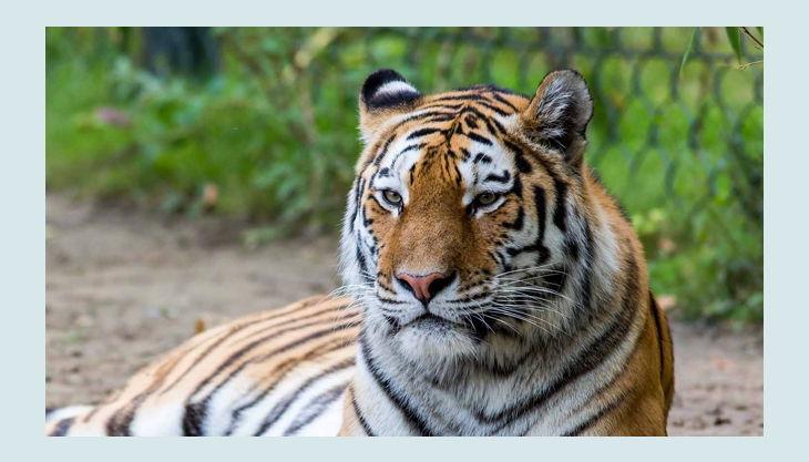 zoom erlebniswelt tiger