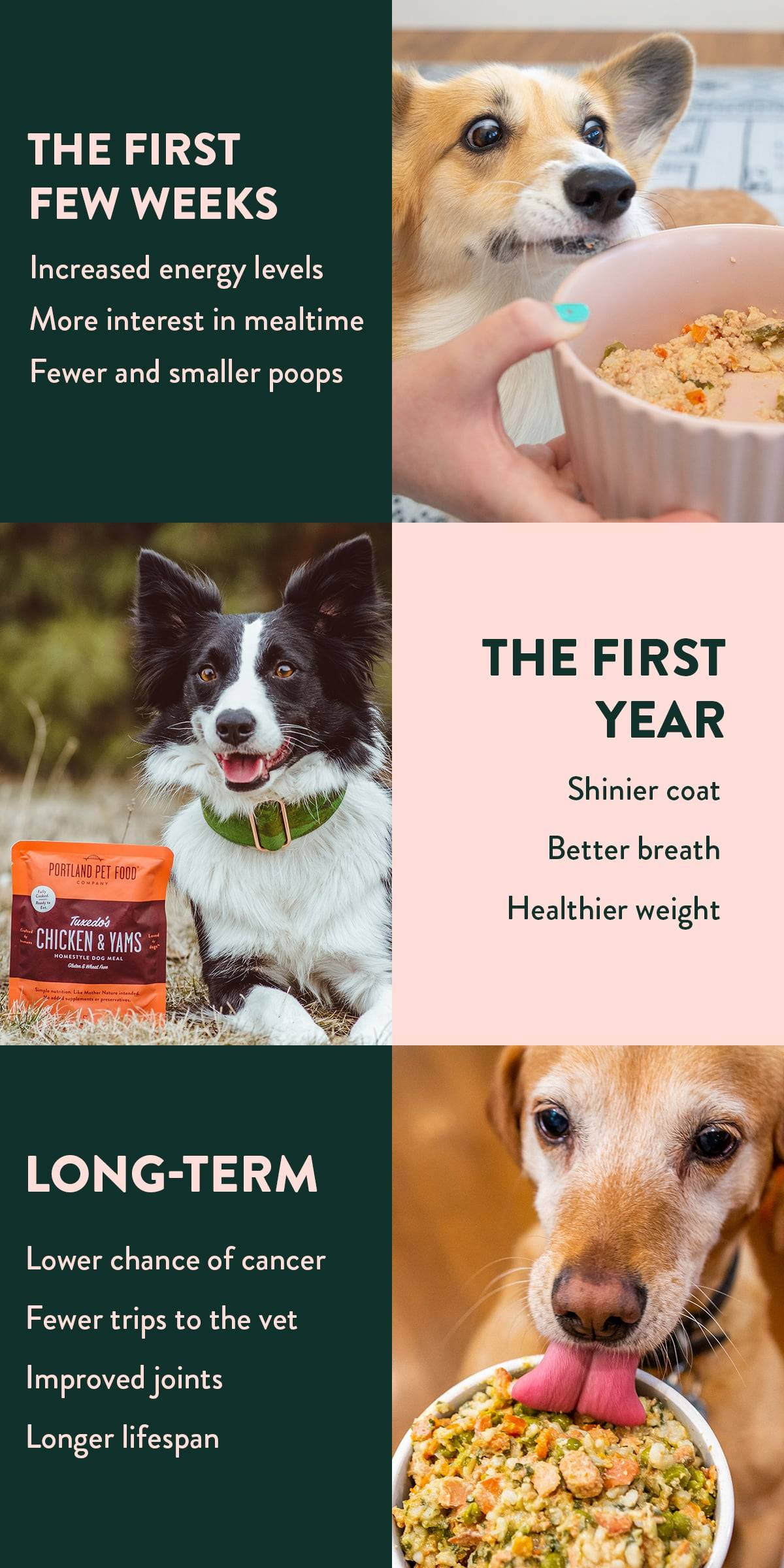 An explanation of ten of the benefits that dogs receive by eating fresh, human-grade dog food.