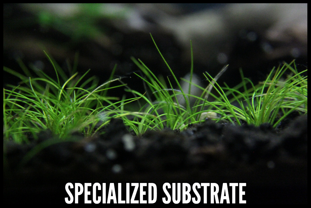 Best Substrate, Specialized Substrate