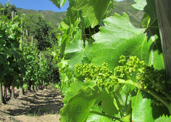 DRY FARMING EN VIÑA MONTES