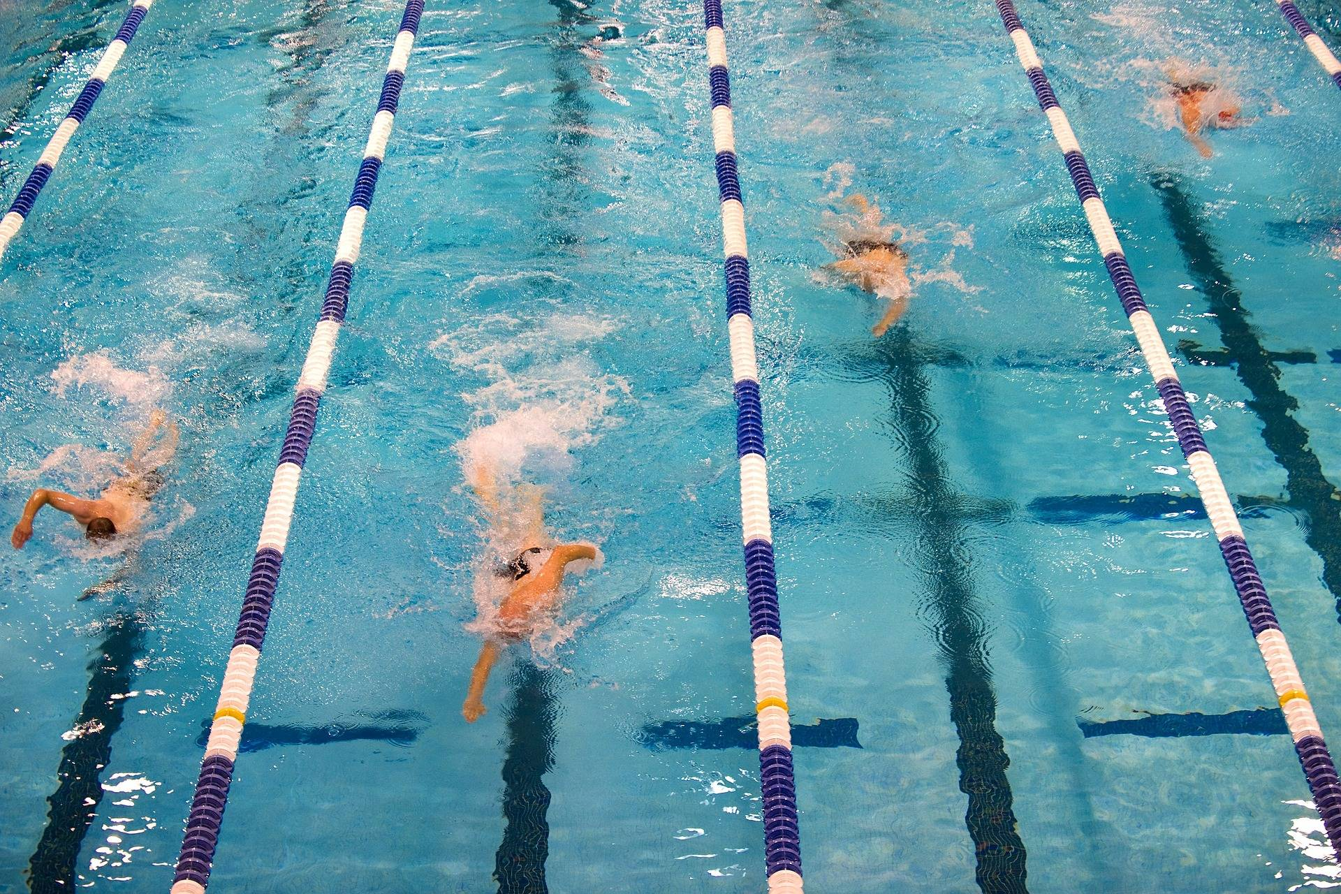swimmers racing in a long course swimming pool