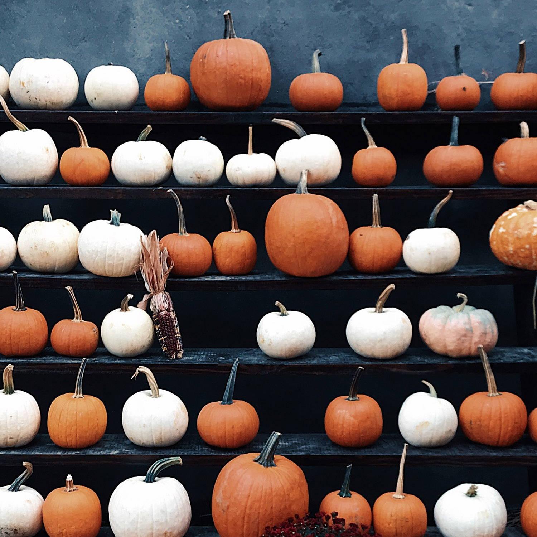 Display of various pumpkins for fall season