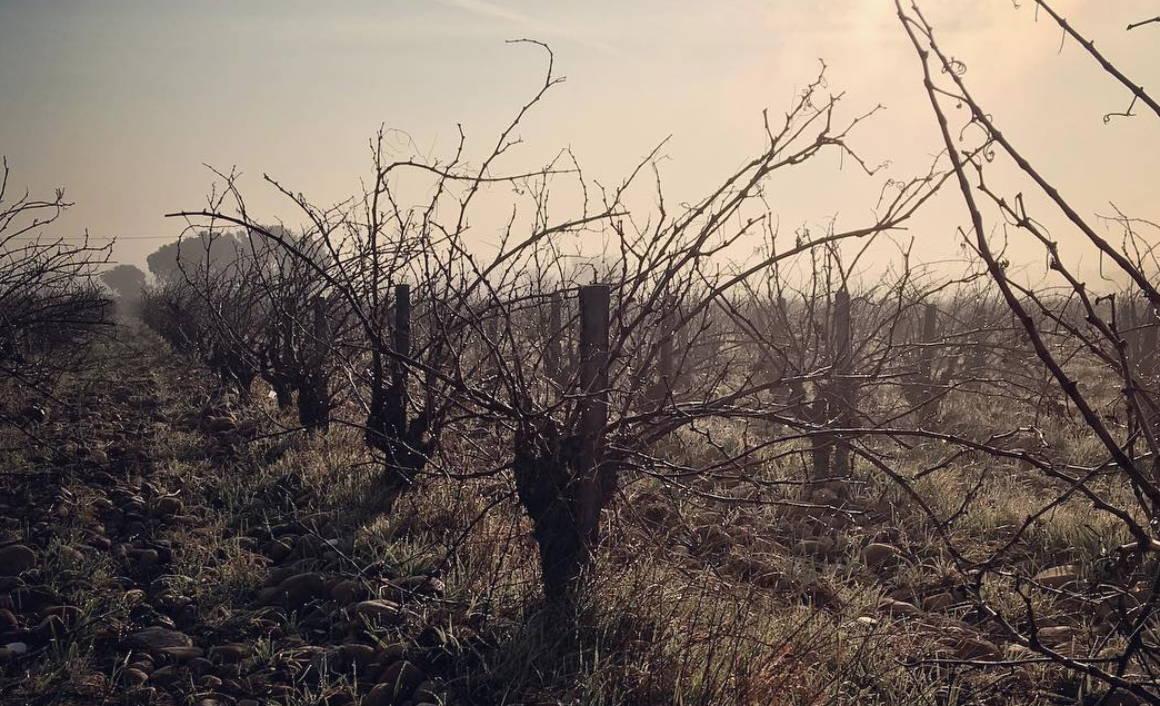 France, vin nature, rawwine, organic wine, vin bio, vin sans intrants, bistro brute, vin rouge, vin blanc, rouge, blanc, nature, vin propre, vigneron, vigneron indépendant, domaine bio, biodynamie, vigneron nature, cave vin naturel, cave vin, caviste, vin biodynamique, bistro brute, Quimper, Finistère, jean-paul daumen, rhône, rhône sud, chateauneuf du pape, clavin