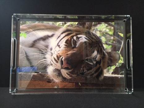Acrylic Serving Tray with Photo of Roscoe Tiger