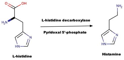 Biosynthesis of Histamine from L-histidine chart