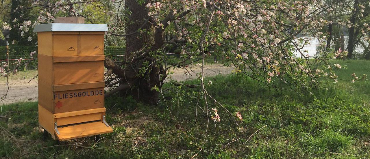 Eine Holzbeute unserer Bienen unter blühendem Apfelbaum in Berlin