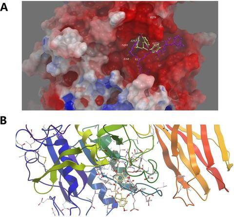 Figure 7. Low-energy binding conformations of ECCG to furin generated by molecular docking