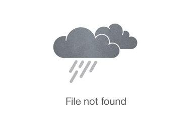 White Rhino Walking Safari