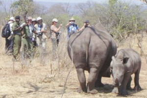White Rhino Walking Safari