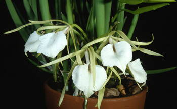 Orchid Identification - What Kind of Orchid Do I Have? – rePotme on grape plant name, pink hydrangea plant name, christmas red plant name, heroin plant name,