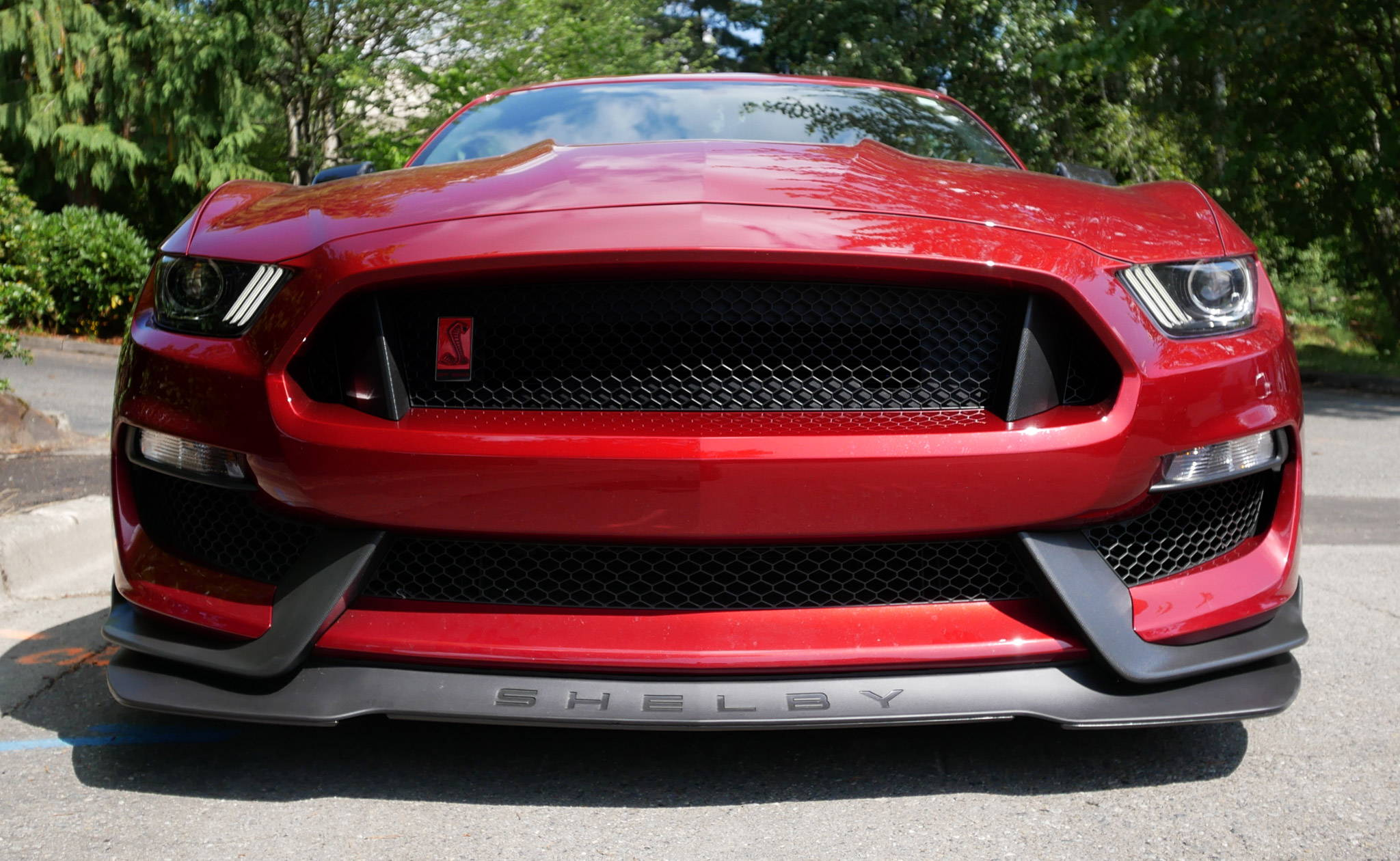 Ford Mustang Shelby GT350R Scrape Armor