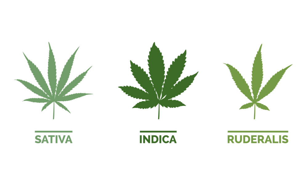 Different Cannabis Type Leaves