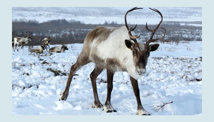 kinder museum energiestadt reindeer pxb