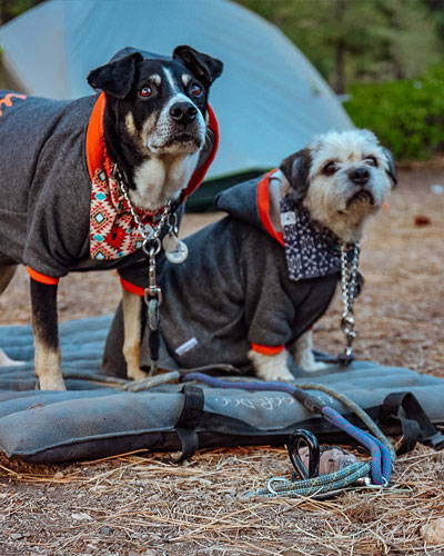 two old dogs tied to the gravity stake in camping
