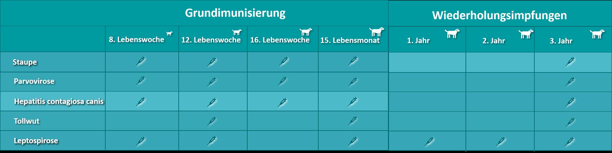 Abbildung: Impfschema - Impfungen bis zum 4. Lebensjahr des Hundes