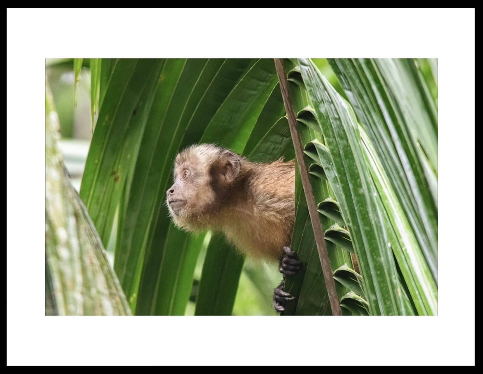 Une photo de Rémi Vinas en forêt Amazonienne