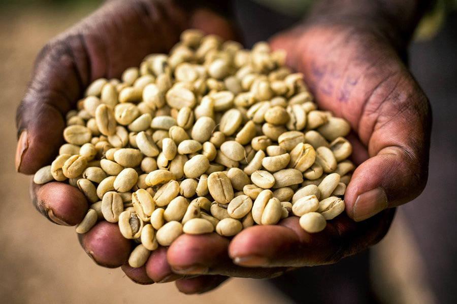 Ethiopia Coffee Region