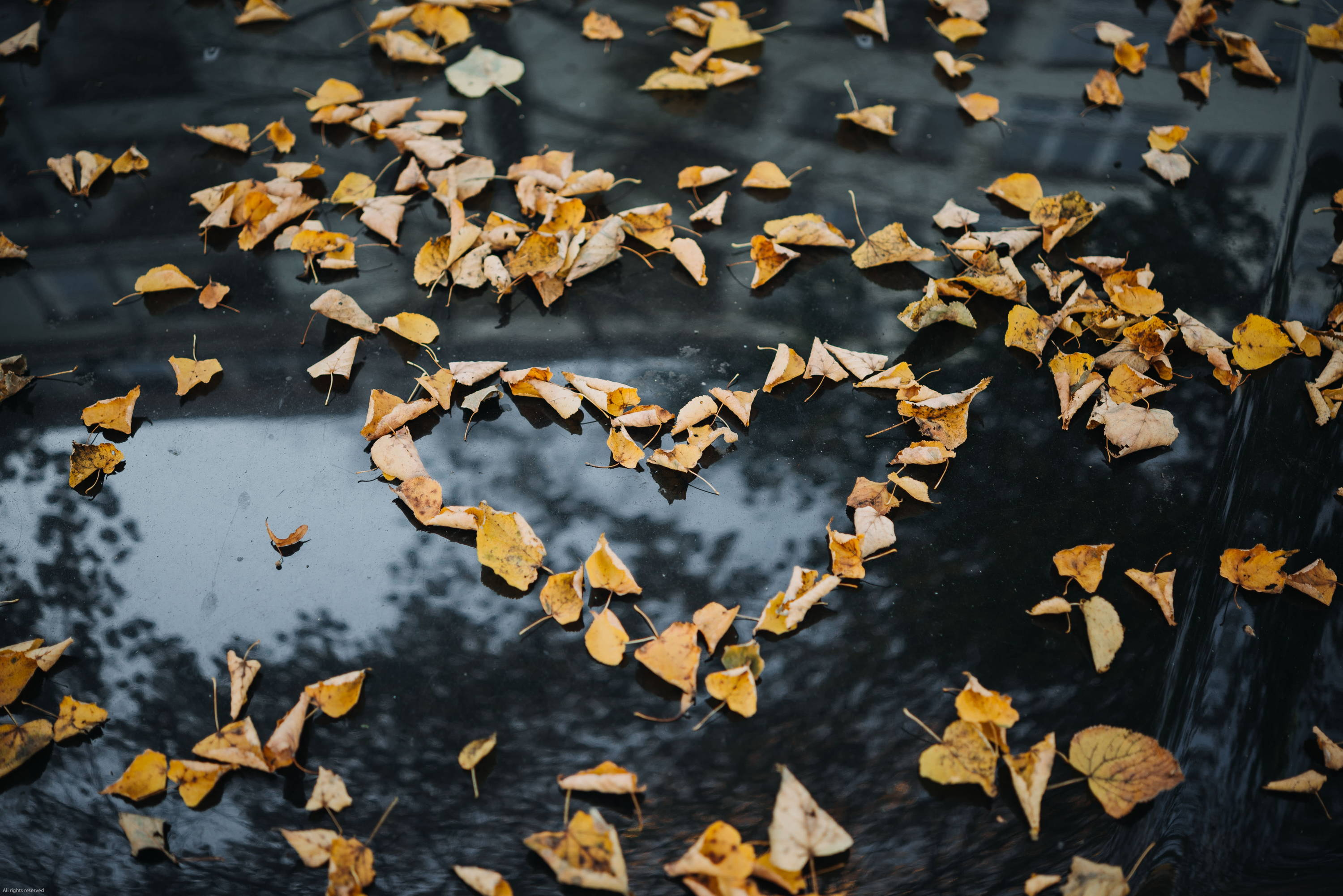 Leaf shaped heart on pond autumn | Lily Gardner London