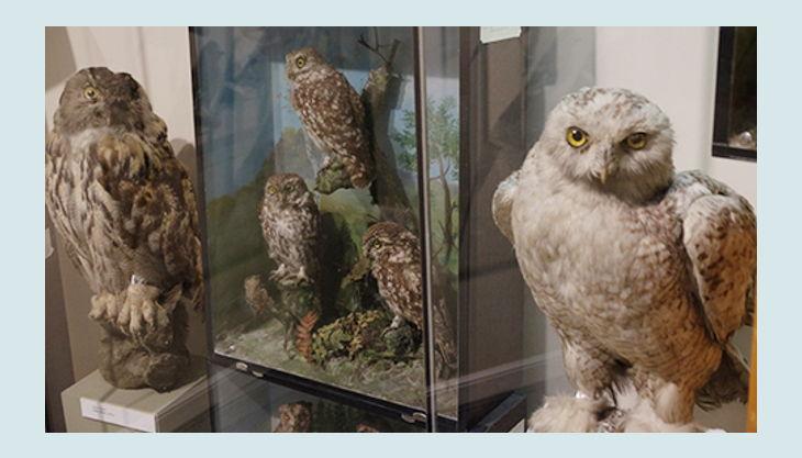 kigeb museumsrallye px