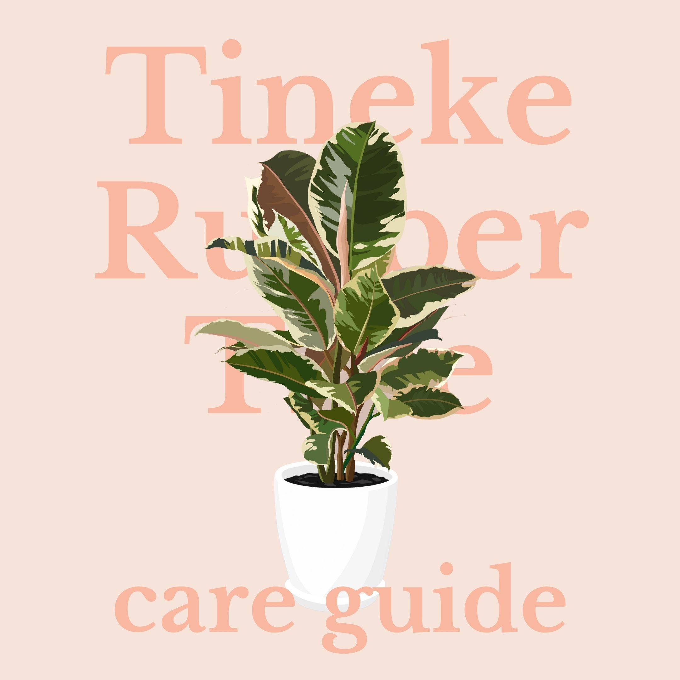 Drawing of tineke rubber tree