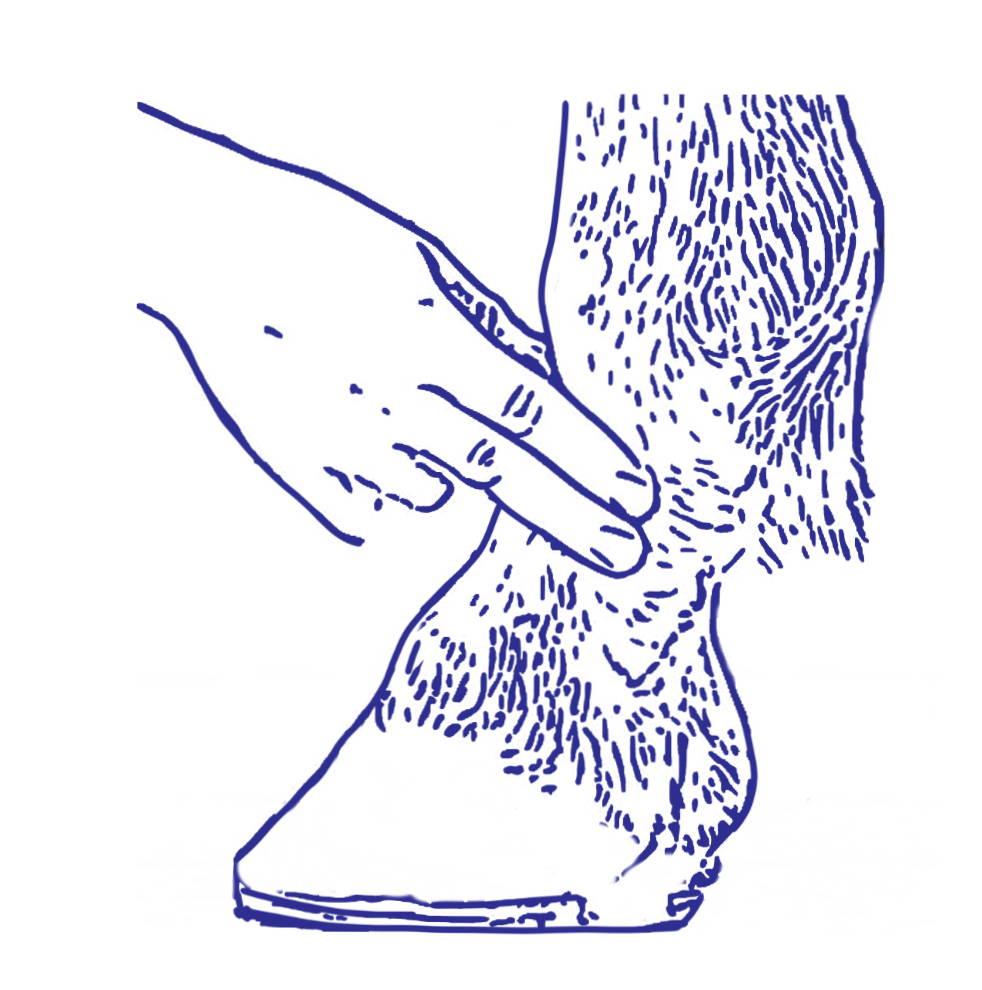 horse leg fingers measuring the digital pulse