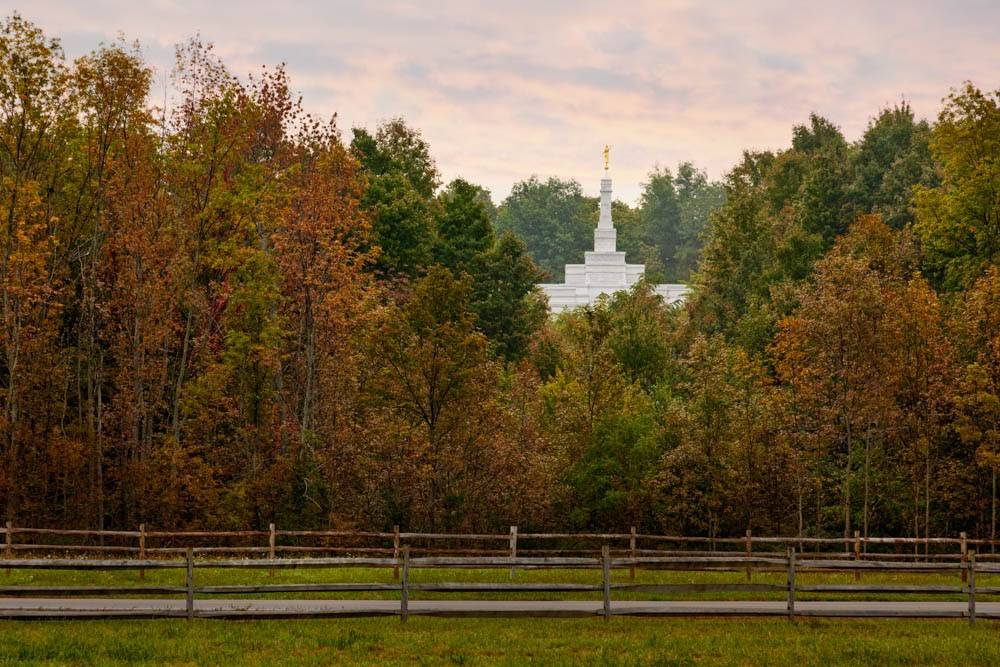LDS art photo of the Palmyra Temple peeking out from behind a wall of autumn trees.