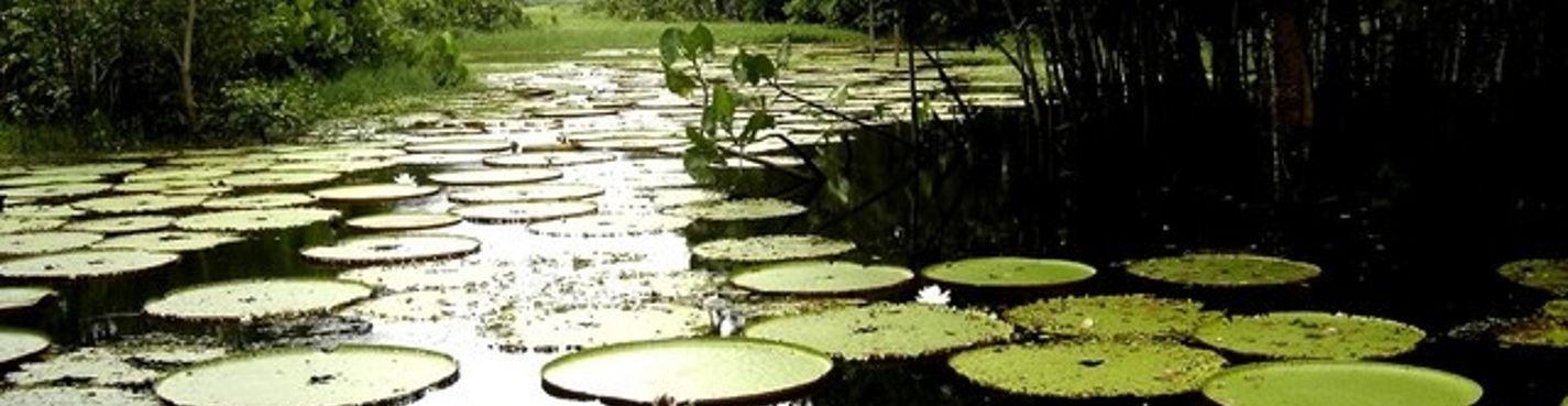 Колумбия: Амазония — Летисия