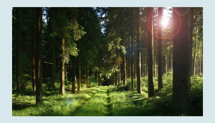 naturgut ophoven wald forest pxb