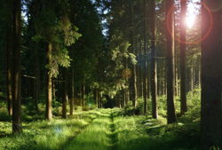naturgut ophoven wald forest pxb
