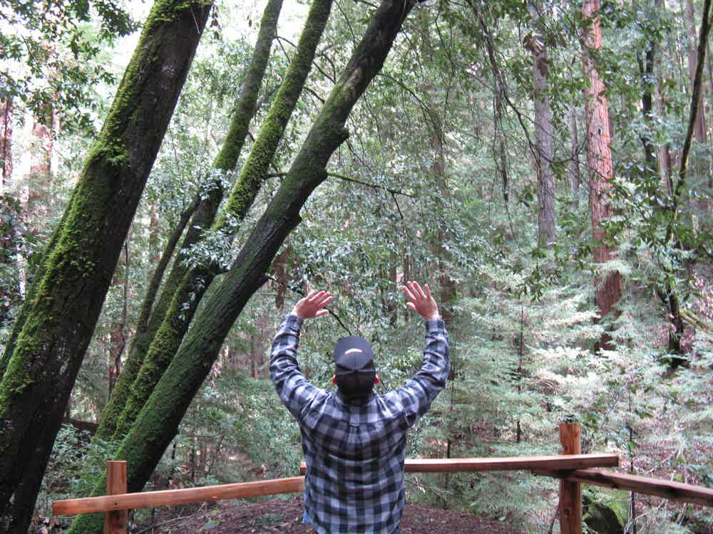 Hike the redwood forest at Huddart County Park in Woodside