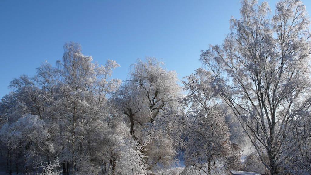 Mit Schnee und Eis bedeckte Bäume in Berlin Hermsdorf