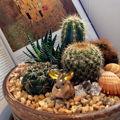 Садики из кактусов и суккулентов