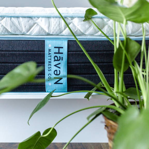 """Side panel of a a Haven 14"""" Lux Hybrid mattress with a large potted indoor plant."""