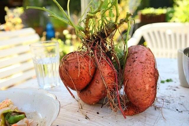 Süßkartoffeln schützen das Herz