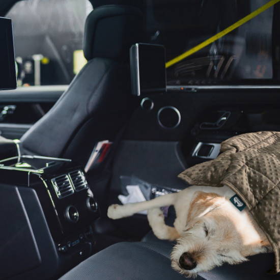 Calming Pets weighted blankets help soothe a dog's anxiety in a car