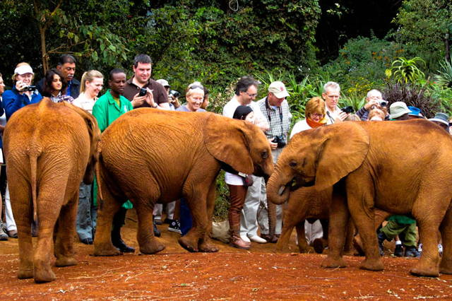 Day Trip to Giraffe Center, Elephant Orphanage, Kazuri Beads & Bomas of Kenya