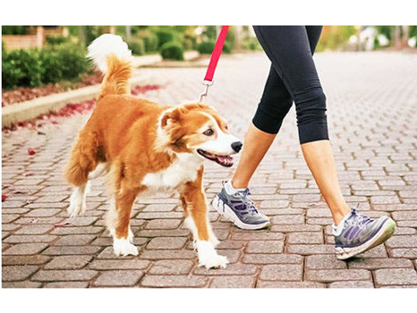 Rent-a-Rower: A Good Day for a Good Dog