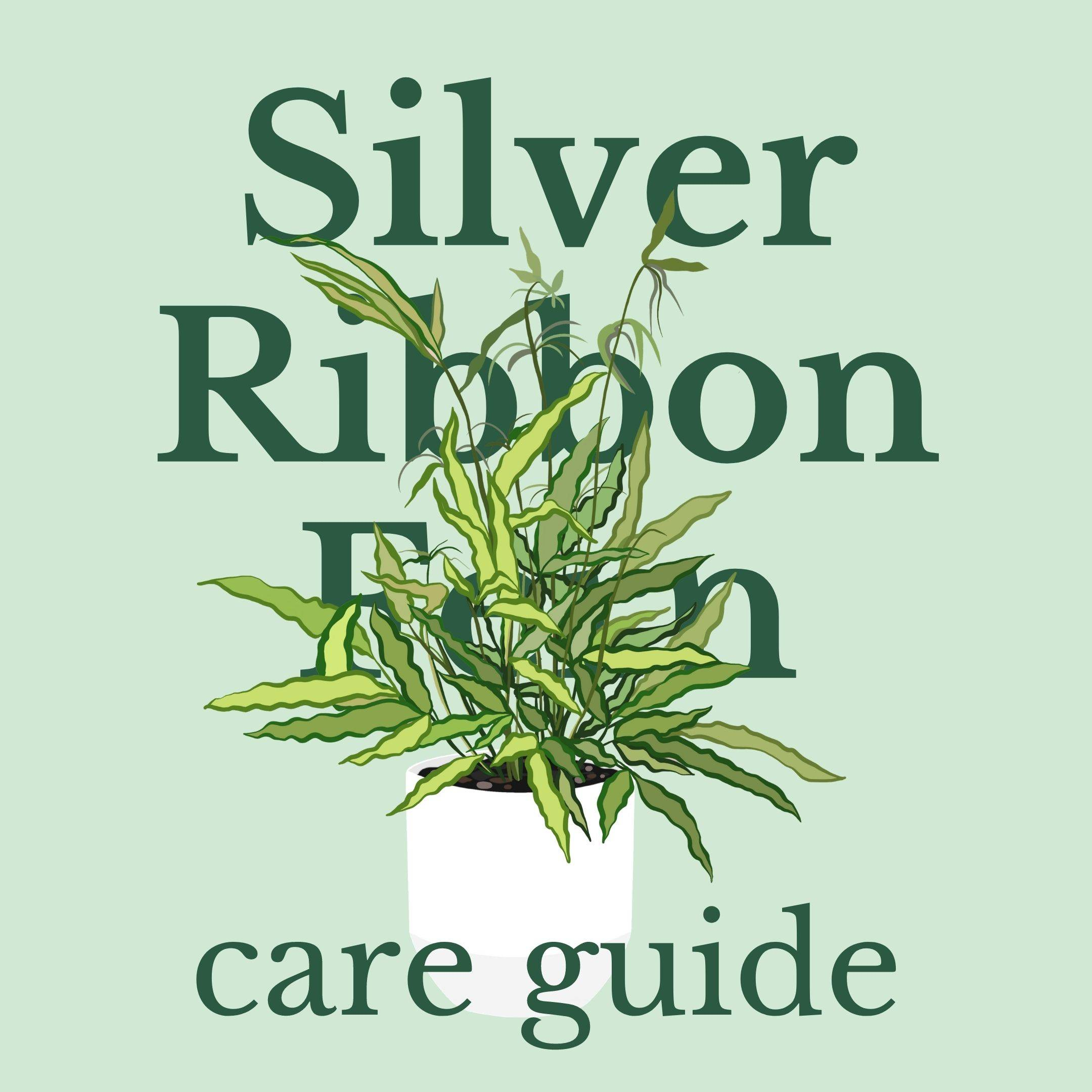 Drawing of silver ribbon fern