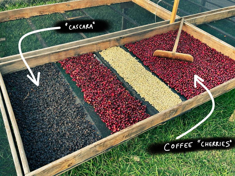 A drying bed for coffee cherries with cascara skins.
