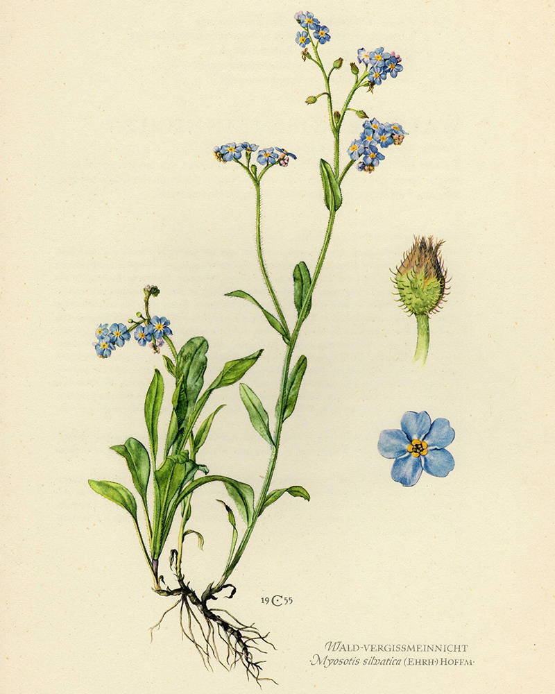 Embroidered forget-me-nots