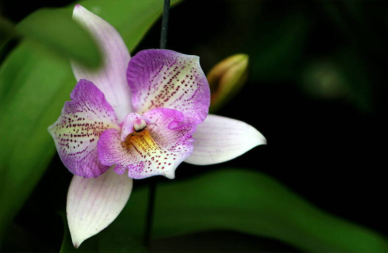 Orchid Care: 10 Easy Tips – rePotme