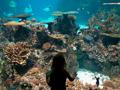4 National Aquarium Passes