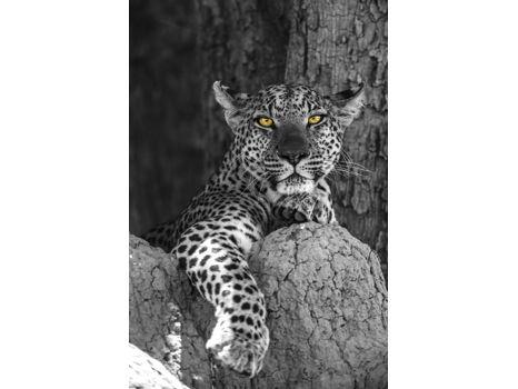 """""""Golden Leopard"""" by Beverly Joubert"""