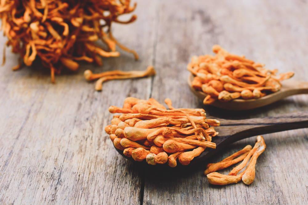 Cordyceps, a medicinal mushroom for energy